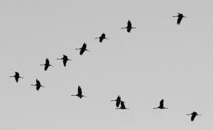 Vogelzug-a18891585