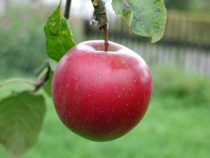 800px-Big_red_apple