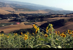 golestan-iran-gorgan-sunflower-farm-00